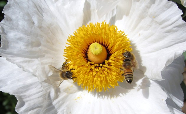Homepage - Matilija Nursery - California Native Plant and