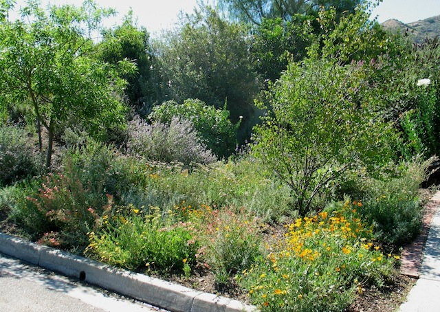Matilija Nursery – California Native Plant and Iris Nursery - Your New California Native Landscape But Does It Pay? - Matilija